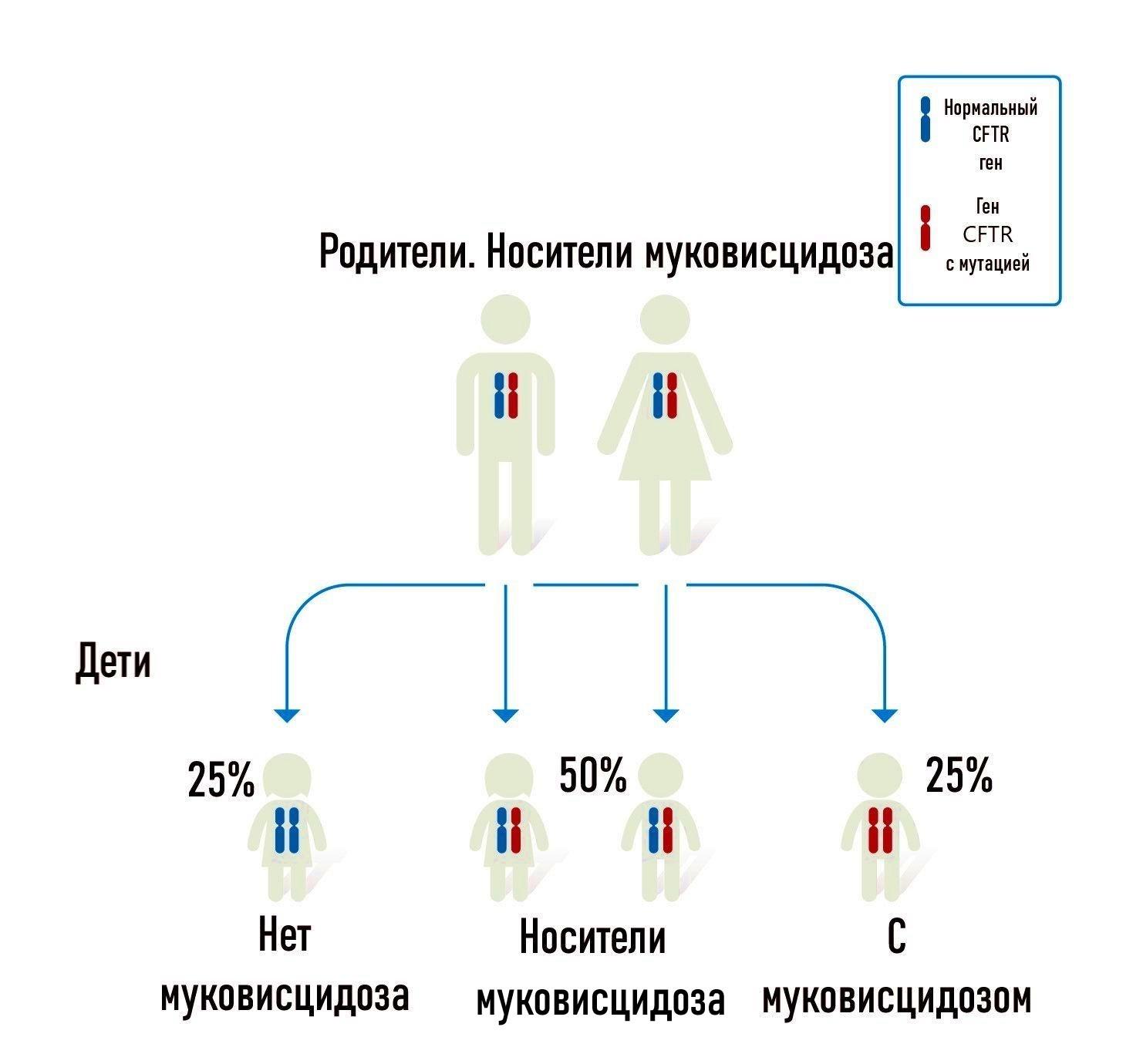 наследственность муковисцидоза