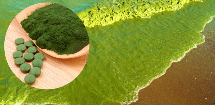 Сине-зеленые водоросли